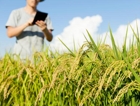 令和の〈農〉を求めて ~スマート農業、社会実装元年~
