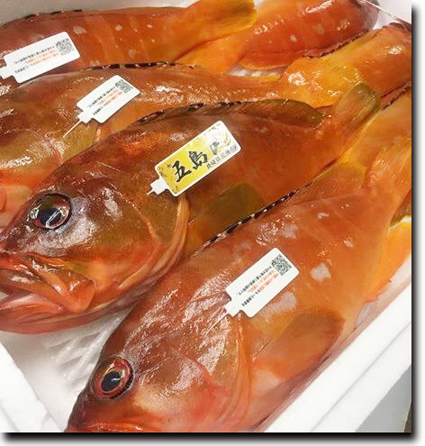 五島列島の新鮮な魚を扱っている