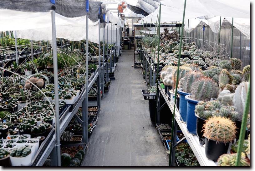 サボテンや多肉植物の数々。珍しい品種がずらりと並ぶ