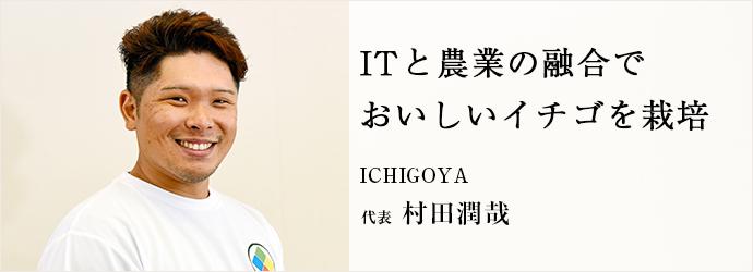 ITと農業の融合で おいしいイチゴを栽培 ICHIGOYA 代表 村田潤哉