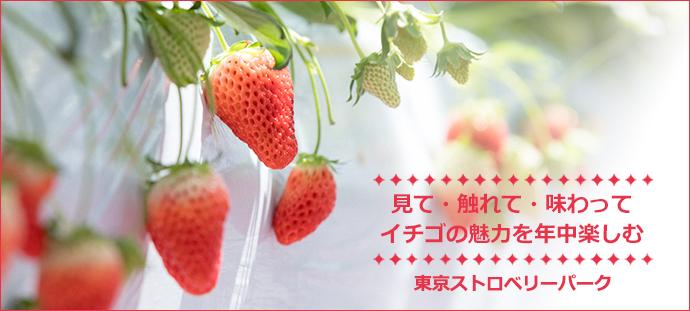 見て・触れて・味わって イチゴの魅力を年中楽しむ 東京ストロベリーパーク